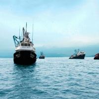 Segunda temporada generará US$ 800 millones en exportaciones pesqueras
