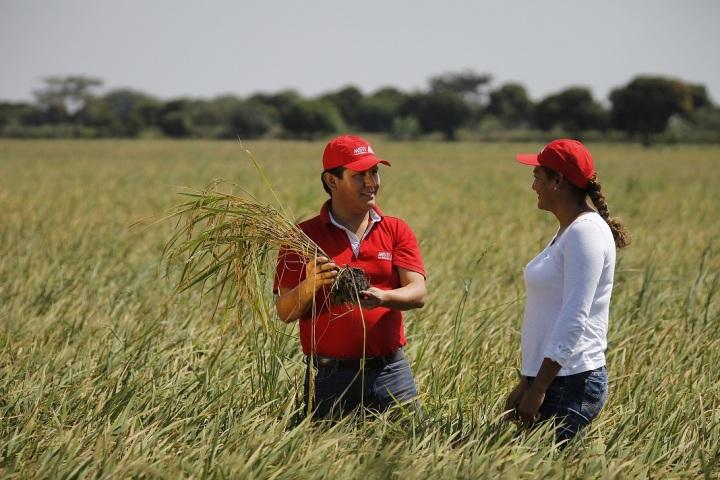 Agricultores peruanos de la costa.JPG