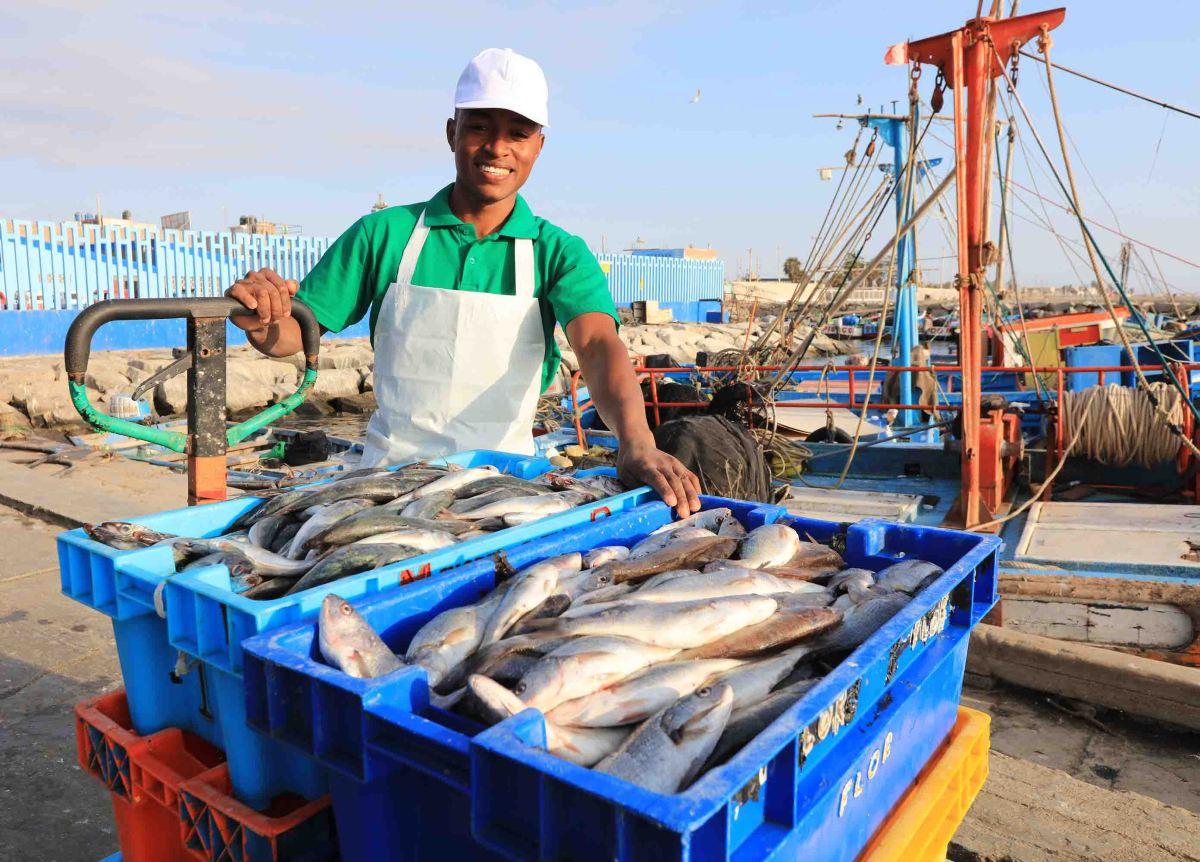 Mejoran condiciones para el jurel en el Pacífico Sur